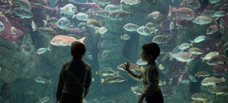 Cretaquarium: Discover the Mediterranean seabed with your kids!