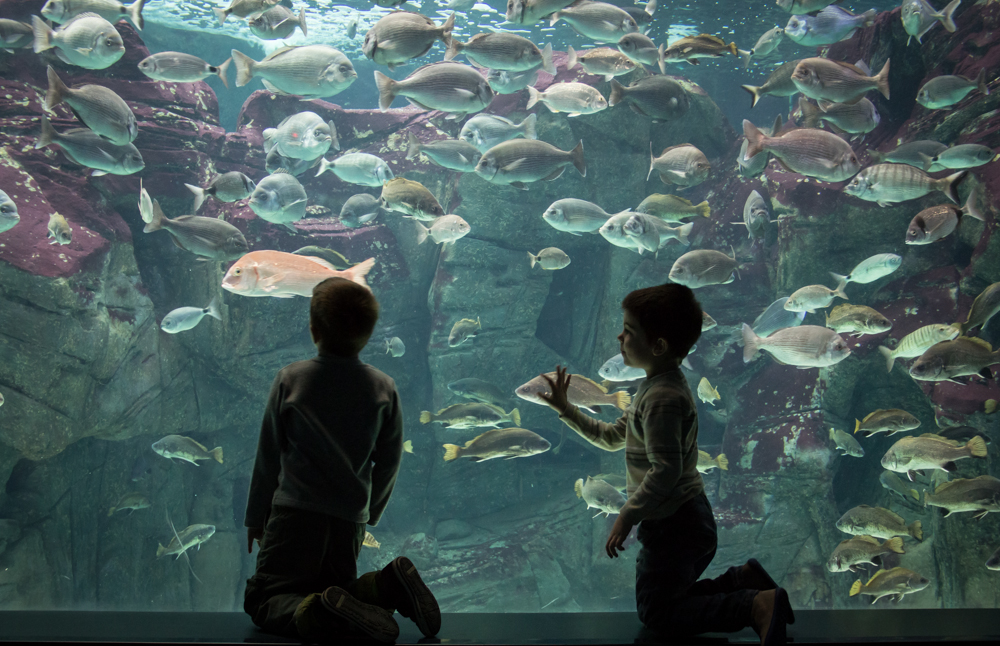 Cretaquarium: Discover the Mediterranean seabed with your kids!