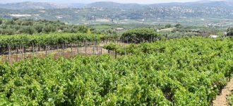 Wines of Crete: Cretan varieties and wineries worth a visit