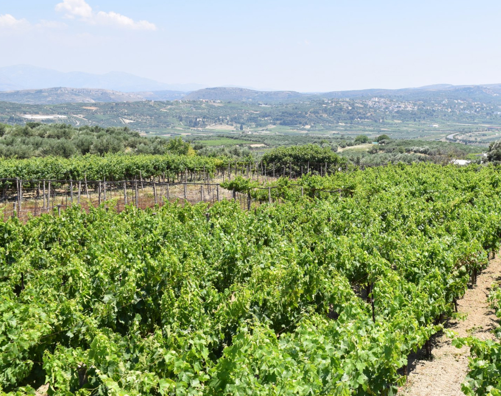 Wines of Crete: Cretan varieties and wineries worth a visit